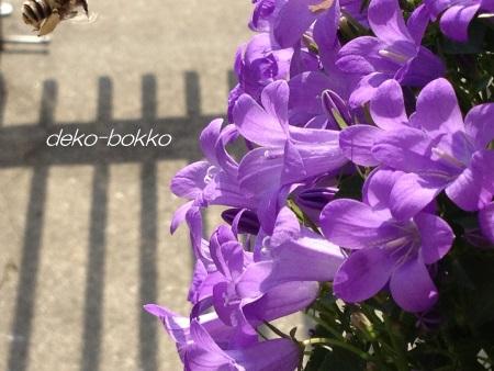 蜂のおしごと 201405