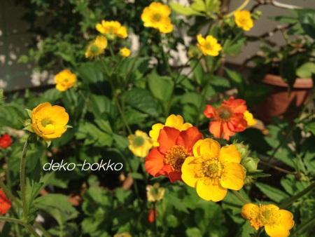 ダイコン草 201405