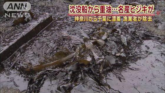 ▼重油の付着したひじき この季節に出回るはずの日本の生ひじきは韓国船の事故のおかげで全滅したよ