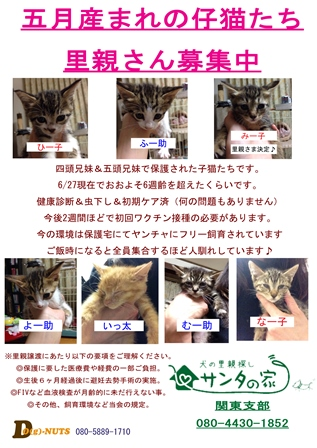 2014 サンタ 猫のコピー mini