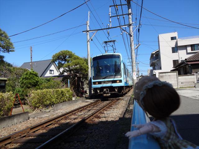 江ノ電を見つめるエルダーちゃん