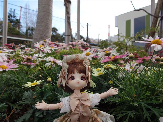 私のお花畑(ドヤァ