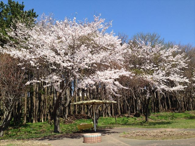 陸奥横浜にあった公園。