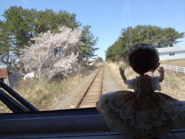 車窓を眺めるエルダーちゃん