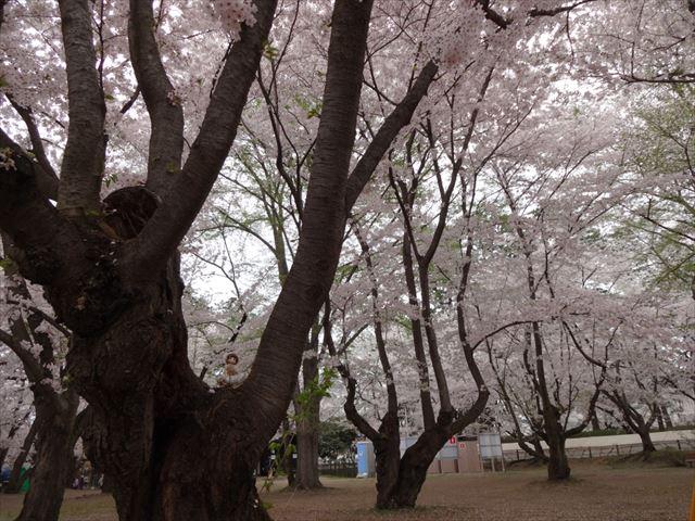 以上、弘前城でした