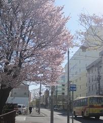 2014帯広桜1