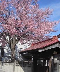 2014帯広桜2