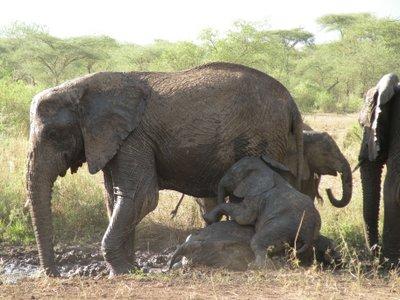 エコツーカフェ アフリカ 20140327