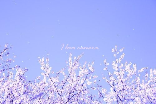 IMG_2014_04_04_9999_44桜吹雪4