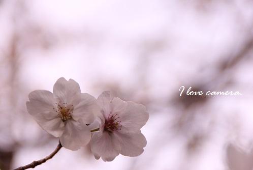 IMG_2014_04_07_9999_74桜7
