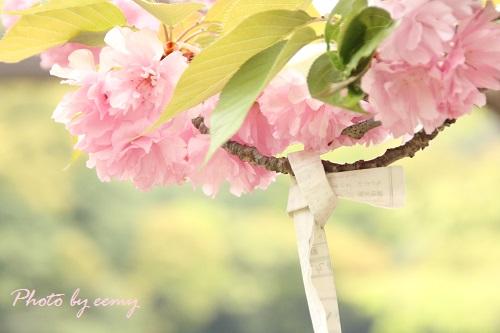 IMG_2014_04_22_9999_250おみくじ