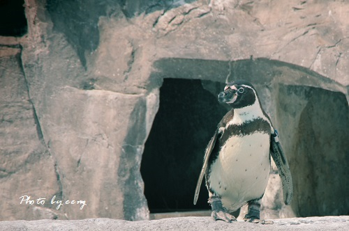 IMG_2014_04_25_9999_8ペンギン