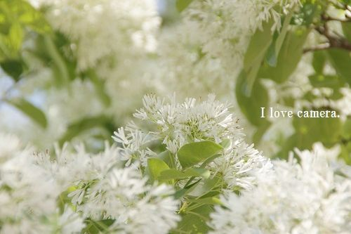 IMG_2014_05_07_9999_80白い花