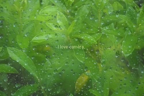 2012_0101_000000-P1010019雨3