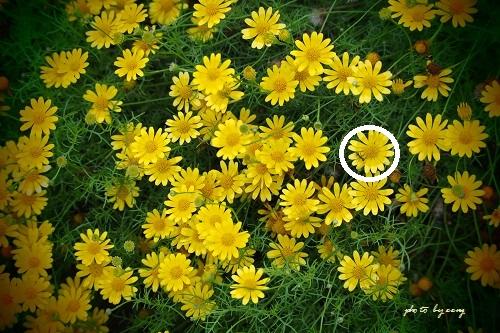 069黄色い花5の答え