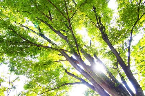 078公園の木