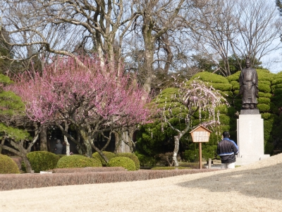 水前寺公園梅 2014 2・23