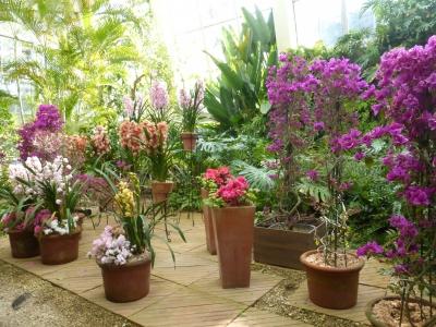温室の花 2014 3・6