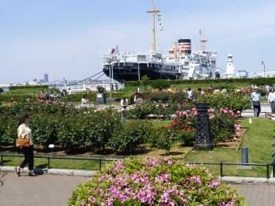 氷川丸と公園 2014 5・11