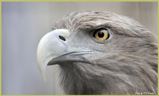 鷲の目 20110620