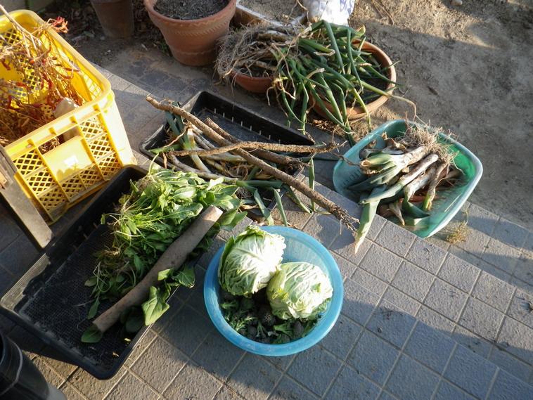 収穫2_14_02_22