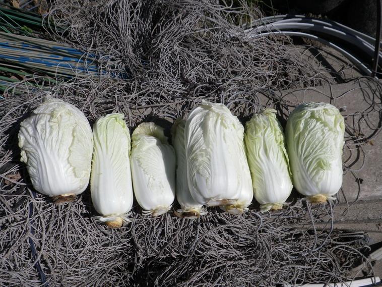 収穫1_14_02_22