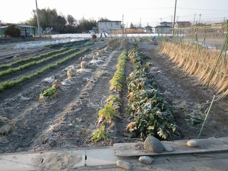 冬野菜14_02_24