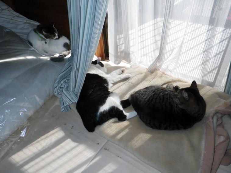猫14_02_22