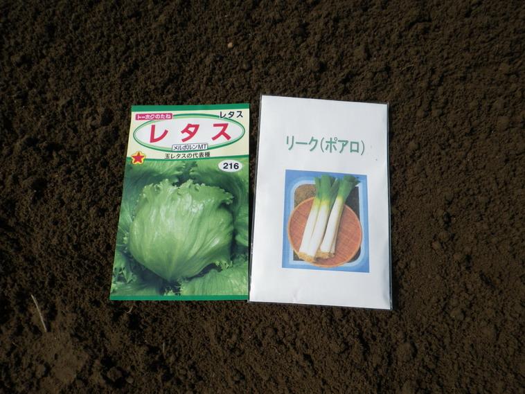 レタス種蒔き14_03_16