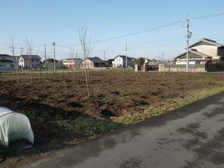 サクラ畑14_03_19