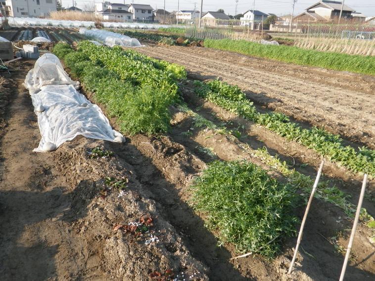 水菜14_03_24