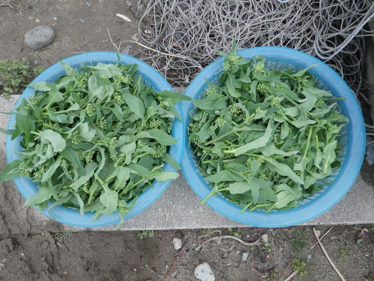 収穫14_03_30