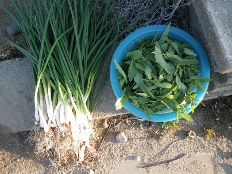収穫14_04_05
