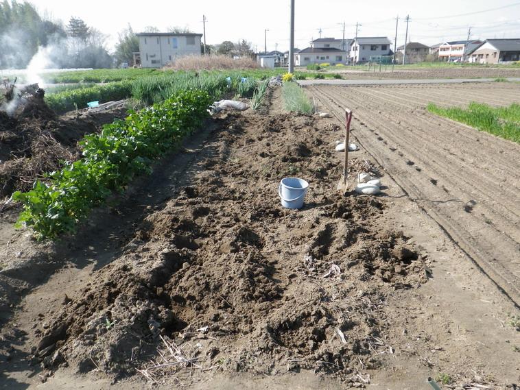 ヤーコン収穫後14_04_05