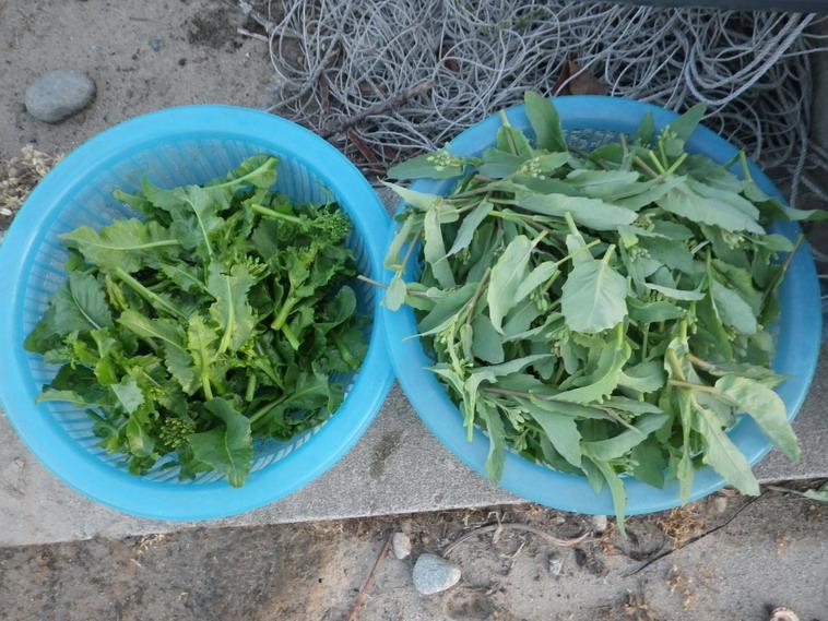 収穫14_04_09