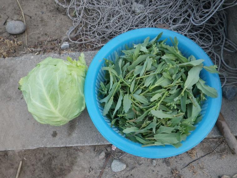 収穫14_04_17