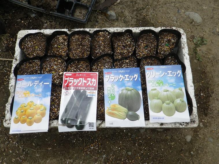 ズッキーニ種蒔き14_04_28