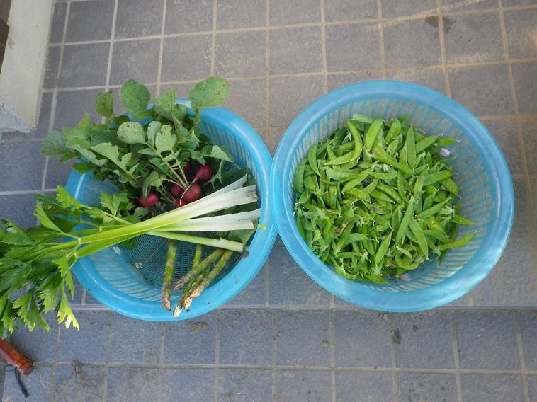 収穫14_05_06