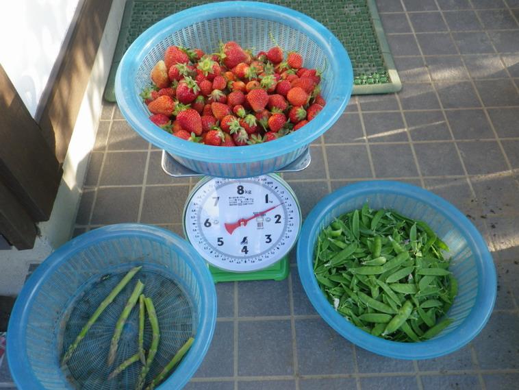 収穫14_05_08