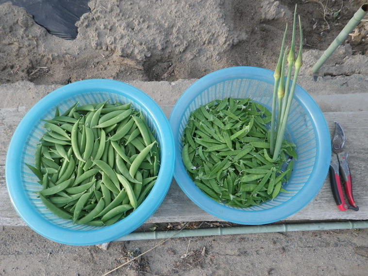 収穫14_05_12