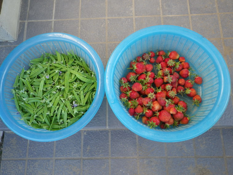 収穫14_05_19