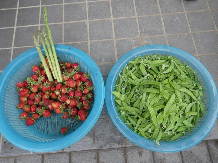 収穫14_05_21