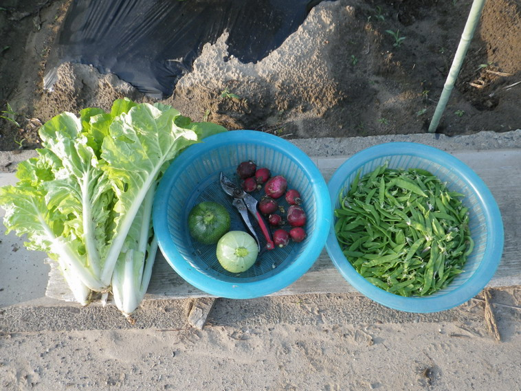 収穫14_05_29
