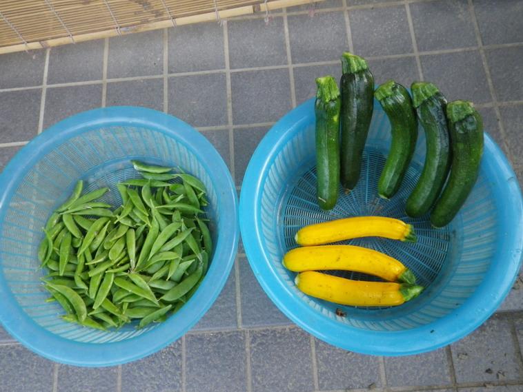 収穫14_06_06