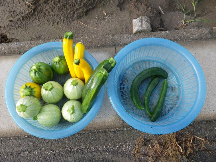 収穫14_06_08