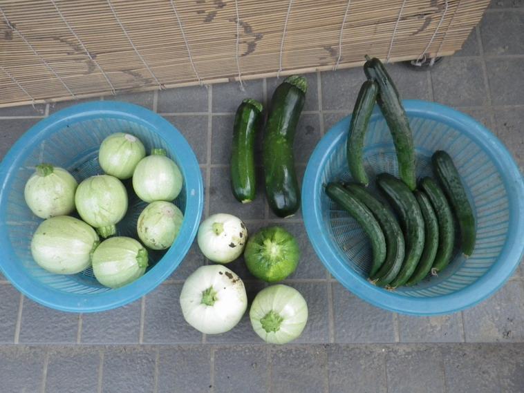 収穫14_06_10