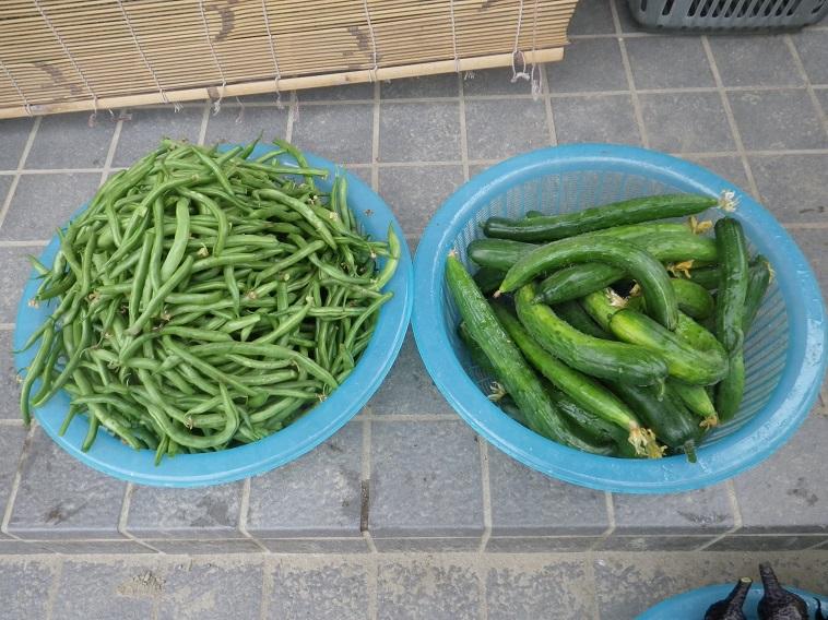 収穫2_14_06_28