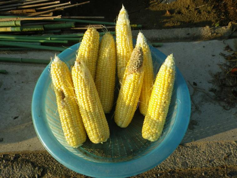 収穫2_14_07_01