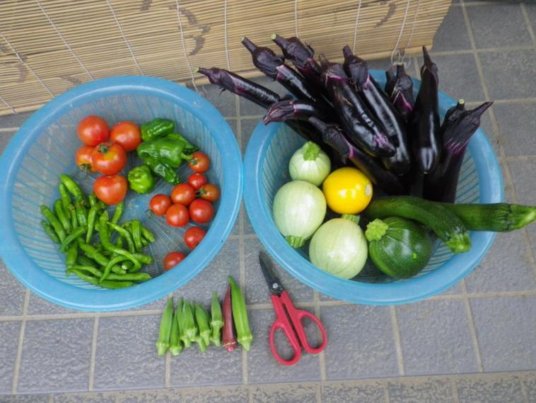 収穫14_07_03