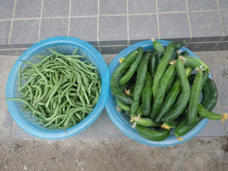 収穫2_14_07_03